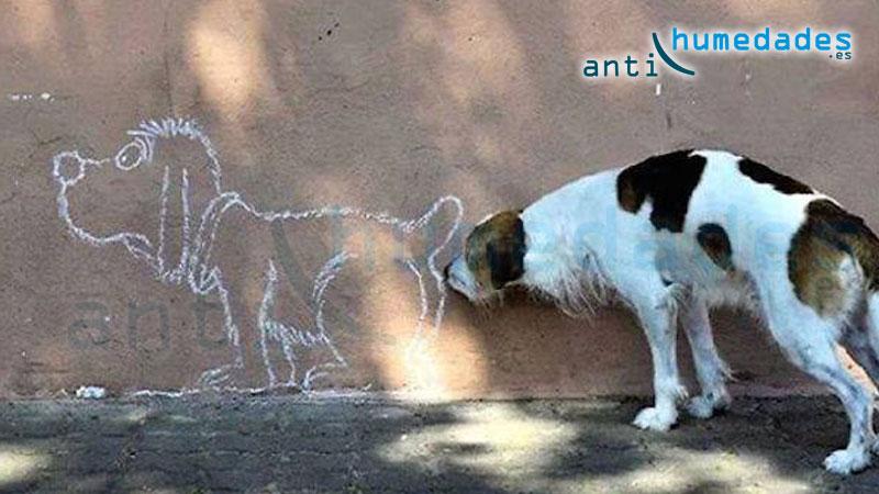 Evita que los perros o personas vuelvan a orinar sobre la fachada de tu casa